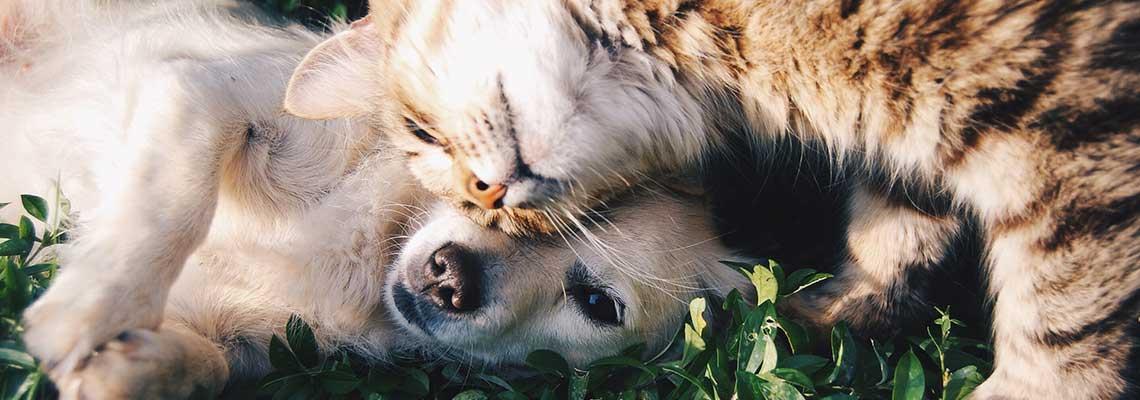frasi aforismi animali